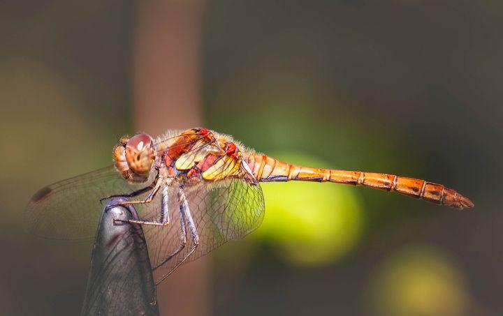 Libelle: Frerk-Peter Werth