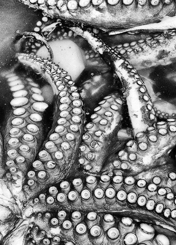 Oktopus bearbeitet-1